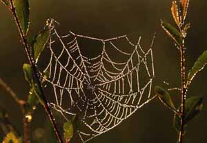 Dew Covered Web, Eric Garnett ARPS CPAGB, Pictorial and Illustrative, Slide