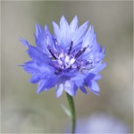 The Digital Image Winner was 'Corn Flower' by Paul Matthews