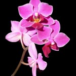 Portrait of orchid