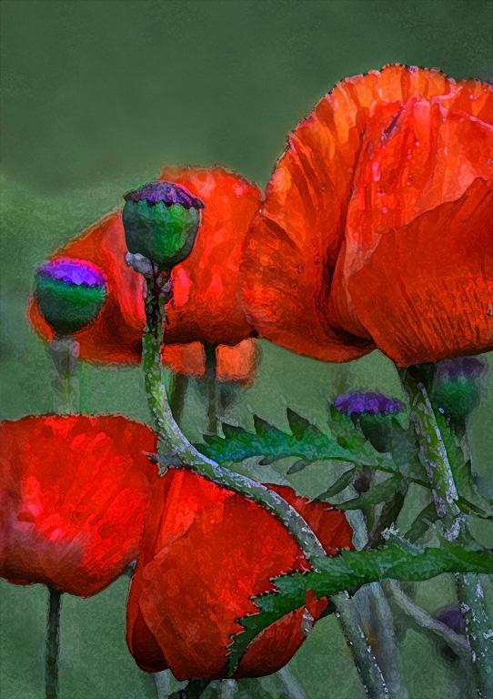 """""""Poppies"""""""