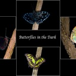 15 Butterflies in the Dark