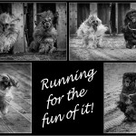 'Running for the fun of it!' by Paul Matthews, The Best mono print and best overall on the night