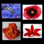 41 Flowers