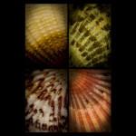 68 Seashells