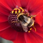 Commended, 'Bee' by Brian Johnson
