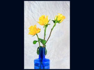 Yellow roses in a blue bottle