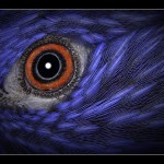 15 Red Eye