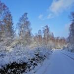 20 Snow Scene