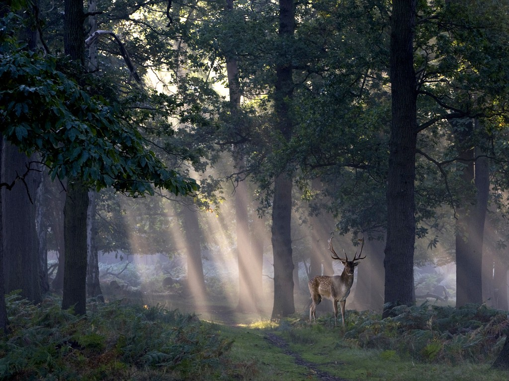 'Deer at Dawn'