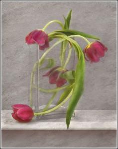 Winning Colour Print. Irene Drummond's Tulips