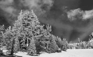 Winning Mono Print. Tracey Dolan's Winter Trees