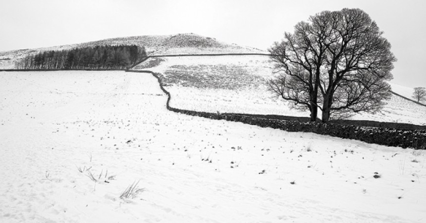 Martin Malies Snow and Trees