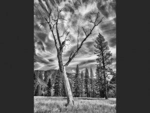 """Tree, Yosemite Valley"" by Martin Reece"
