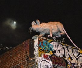"""Big Moon Rat""  by Tim Jones"