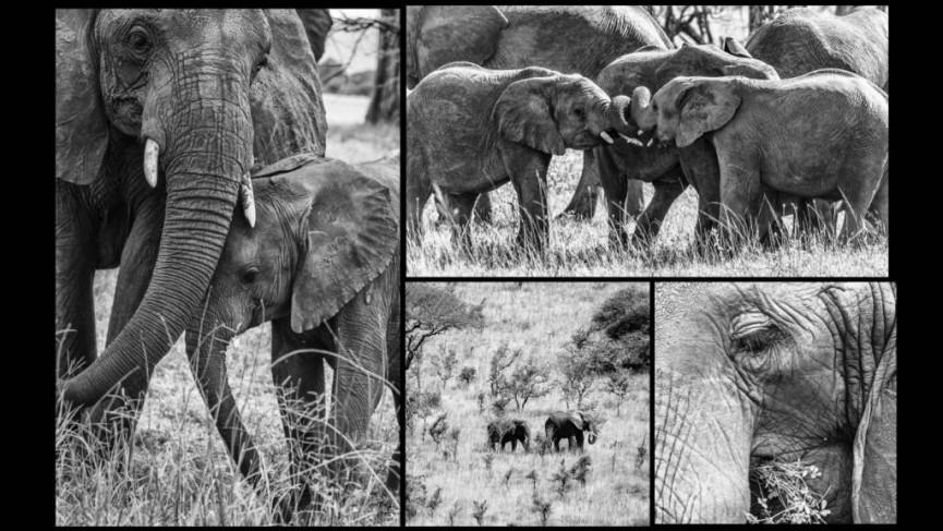Elephants at Nogogoro by Derek Gould