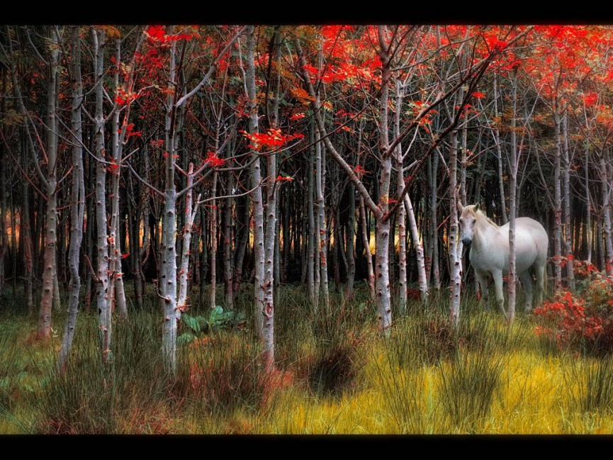 "Joint 1st Place Digital Colour - Pony in Copse"" by Paul Matthews"
