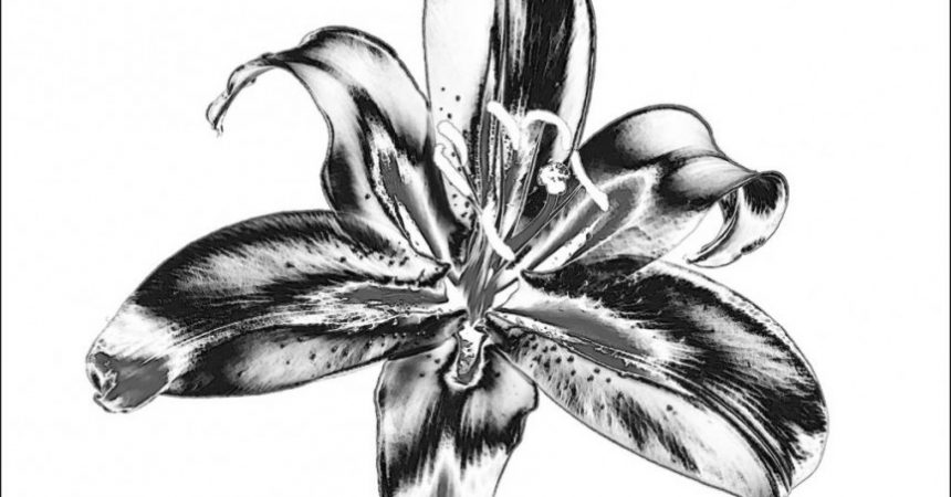"1st Place Mono Print, ""Lily"" by Alan Shufflebotham"