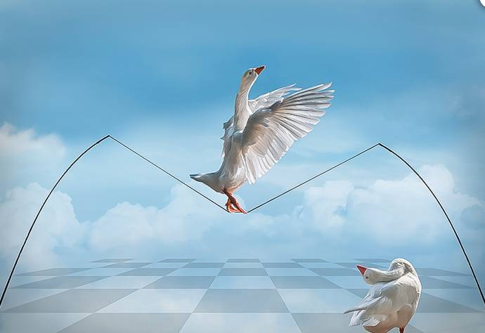 """Don't Look Down"" Lynne Morris"