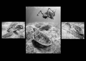 "Ist Place Mono Print, Overall Print Winner, Overall Best Image of the Competition.   ""Turtle Shooter"" by Derek Gould"