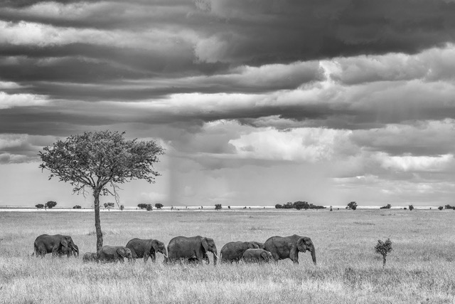 Distant Rain, Serengeti_Derek Gould