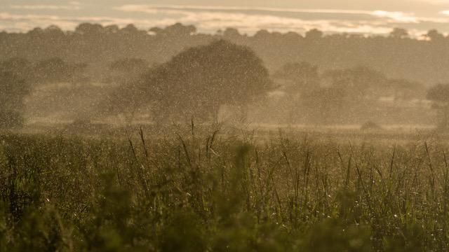 Rainstorm, Serengeti)Derek Gould