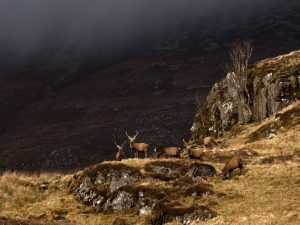 "First place Digital Colour - ""Highland Stags"" by Phil Dudley"
