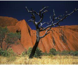 Tom Dodd's Ayres Rock