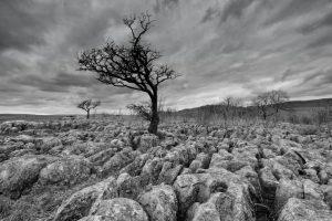 Simon Rahilly_Tree on Limestone Pavement_DM