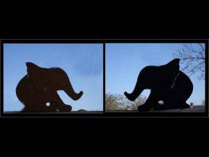 Elephants in the Window