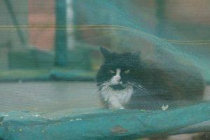 neighbours cat on trampoline