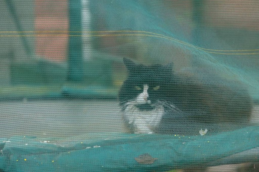 neighbours cat on trampoline