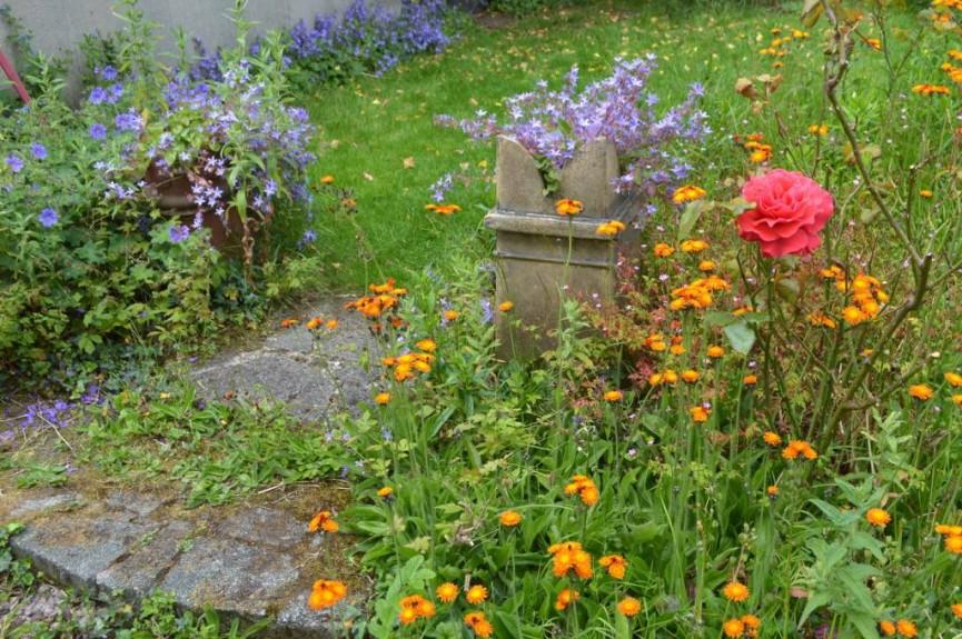 """My Garden"" John Thomson"