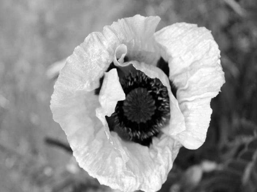 """Poppy {1}"" Marie McGonigal"