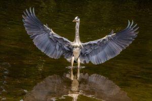 """Heron"" Phil Longfoot"