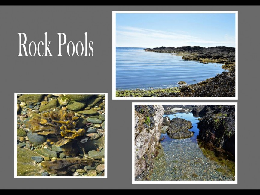 Anne Roberts - Rock Pool