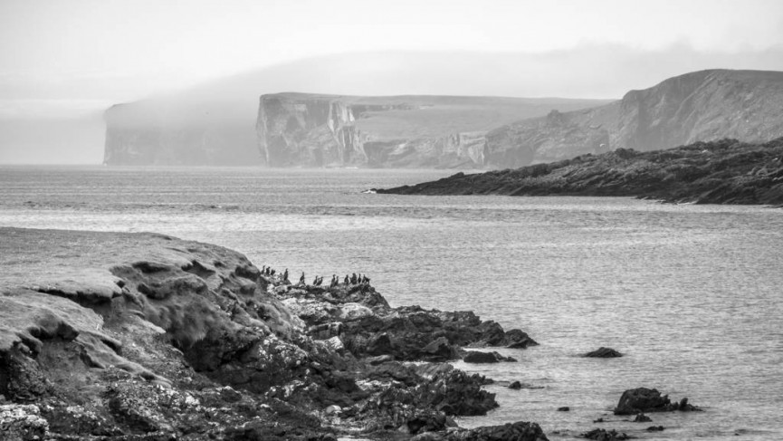 Derek Gould_Shetland, Brasay and Cormorants from Noss