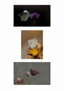Sarah Bevan - Butterflies