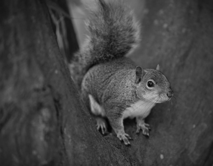 Sarah Bevan_Squirrel in Park