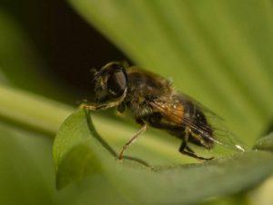 Alan Cargill A Species of Bee