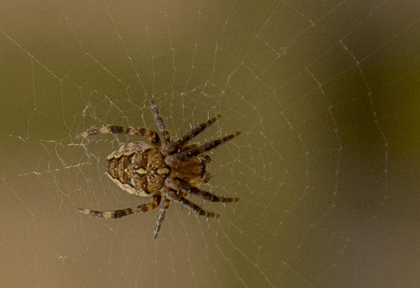 Alan Cargill Arachnid