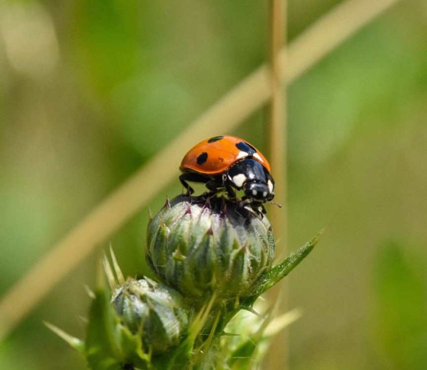 AmyAshley-Mather Ladybird