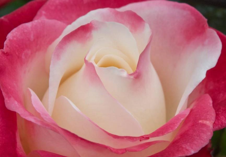 Flower Power - Ann Roberts