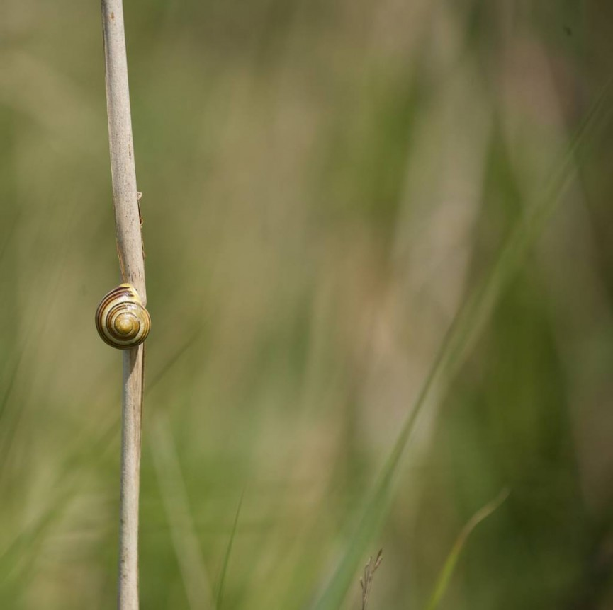 Sarah Bevan- Snail in long grass