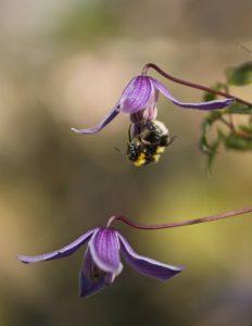 Simon Rahilly, Bee Feeding