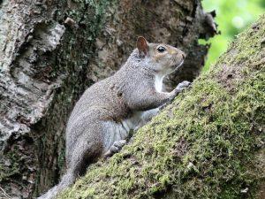 Squirrel - Marie McG.