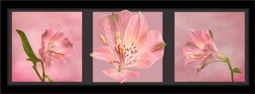 """1st Place Irene Drummond """"Pink Alstroemeria"""""""