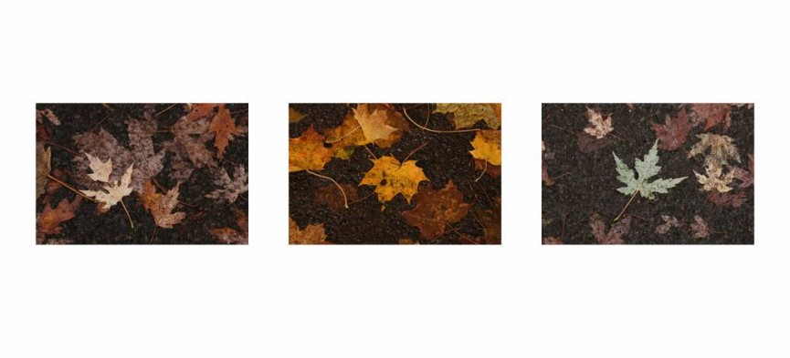 "C - Sarah Bevan ""Autumn Leaves"""