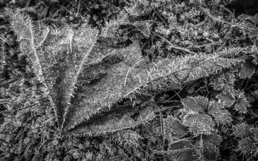 Spiky Maple by Derek Gould