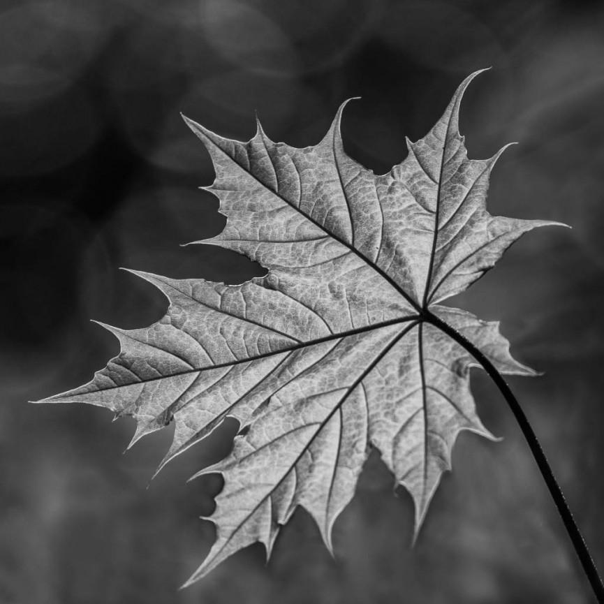 New Leaf by Christine Lowe