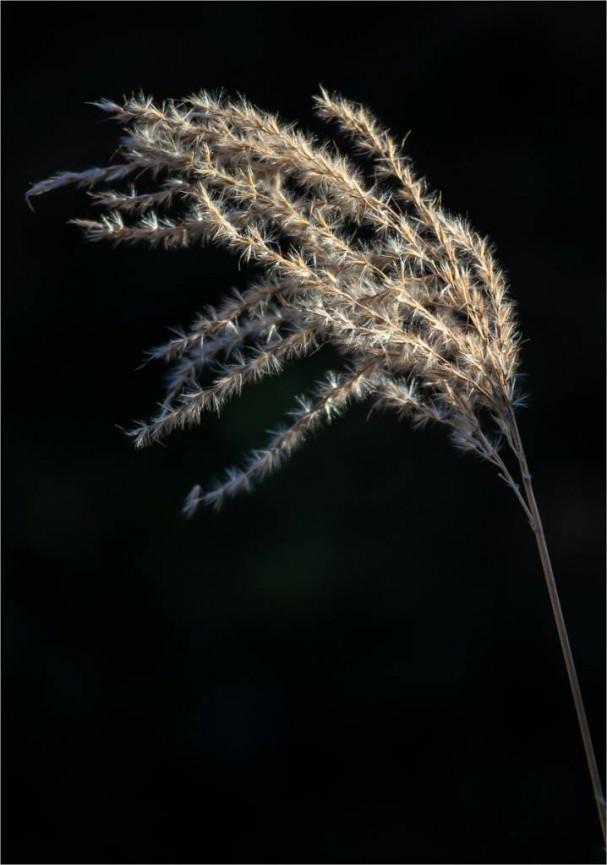 Winter Grasses by Martin Reece
